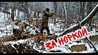 Охота на норку видео с лайками 2019