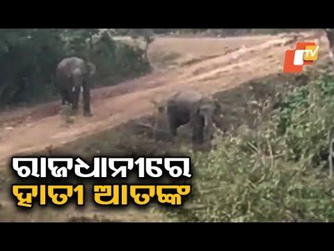 Elephant on rampage, damage crops on Bhubaneswar outskirts