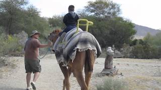 Camel ride @ The Living Desert. Palm Desert, California.