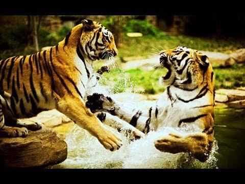 Survivor - Eye of the tiger video with Lyrics - YouTube