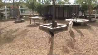 Dog Obedience Training Los Angeles