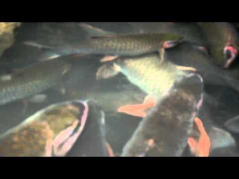 Suối Cá Thần