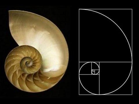 Mollusc Animation  Nautilus Body Plan HD