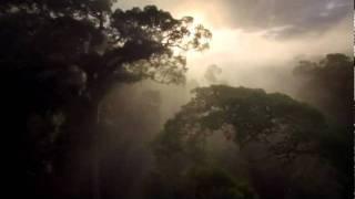 Video NATURE SUITE - MOVEMENT V - BOLERO LA SELVA download MP3, 3GP, MP4, WEBM, AVI, FLV November 2017