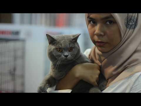 KELAB KUCING MALAYSIA | PETS LOVER FIESTA 2018 | KOMPLEKS KRAF - Part 1/4