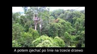 Wyprawa do dżungli amazońskiej - na czubek drzewa