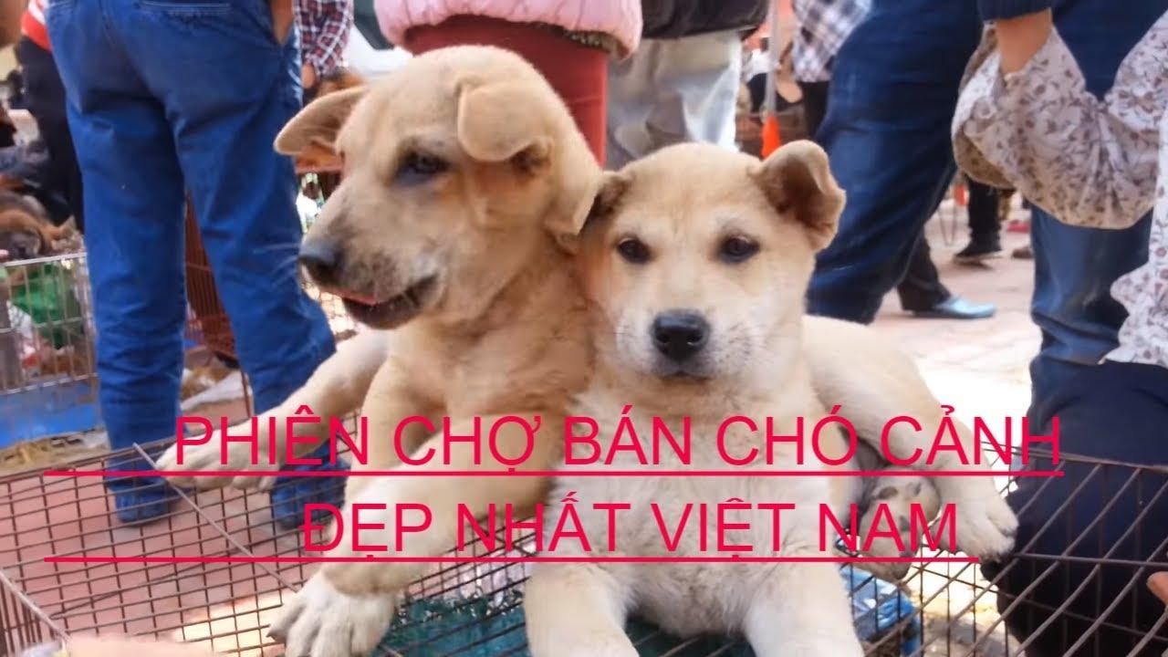 Khám phá phiên chợ mua bán Chó cảnh,Mèo cảnh,Cá cảnh đẹp nhất Việt Nam – Chợ Dư Hàng Kênh Hải Phòng