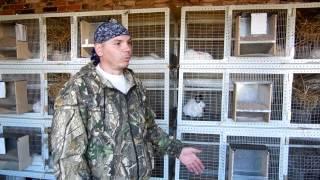 Разведение кроликов как бизнес: выгодно ли это или нет