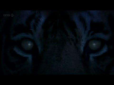 Jah Wobble - Tyger Tyger (dub version)
