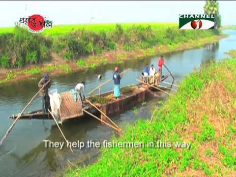 Nature and Life   Episode 02 Otters of Bangladesh