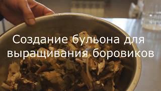 Бульон для получения мицелия. Выращивание белых грибов. Белые грибы на участке. ( вопрос №2)