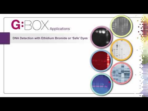Syngene G:BOX Gel & Blot Imaging Systems