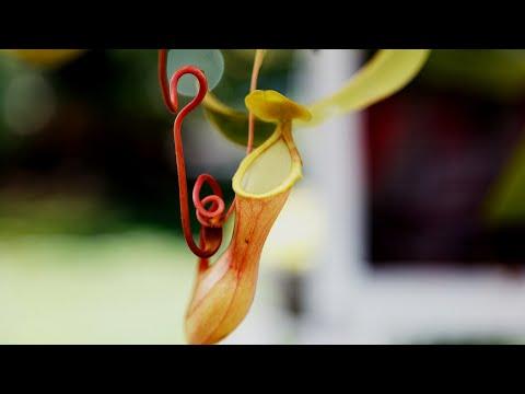 Вопрос: Чем питаются растения?