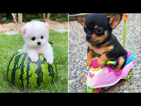 Download Baby Dogs 🔴 Cute and Funny Dog Videos Compilation #13 | 30 Minutes of Funny Puppy Videos 2021