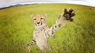 CHEETAH vs DRONE // South Africa