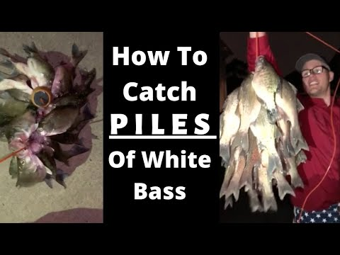 How To: Fishing The White Bass Run