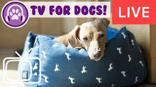 TV for Dogs! Nature and Bird TV to Entertain Dogs with Relaxing Music!
