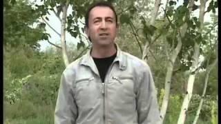 Цахкир инц амар