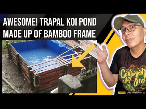 How to build a cheap ( trapal koi pond)in the Philippines you need to know
