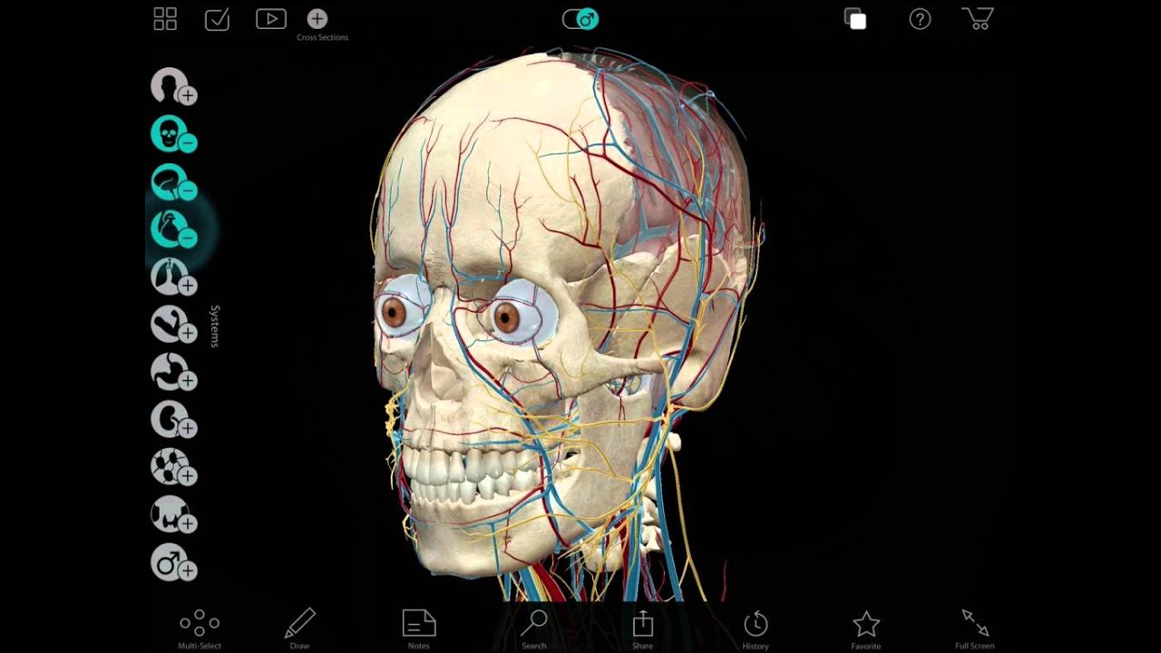 Visible Body Apps Anatomical Precision In Real 3d Youtube