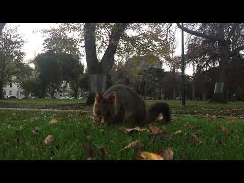 Melbourne's little citizen