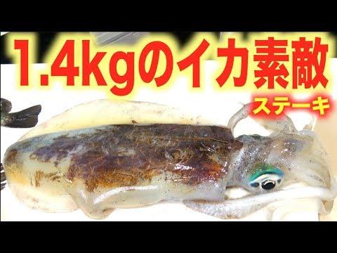 真冬に釣れた1.4kgのイカを丸々ステーキに!