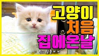 고양이 입양하고 싶은분, 이 영상 먼저 보세요(아기고양이 입양기 ft. 강아지/토이푸들 키우는집)