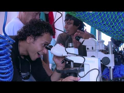 Explore Baja on a Citizen Science Expedition aboard the Quino El Guardian