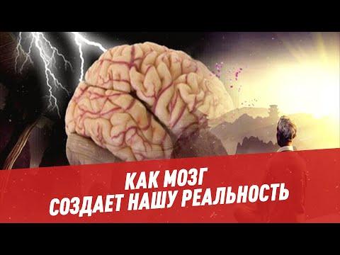 Жизнь внутри головы: как мозг создает нашу реальность