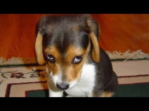 GUILTY DOGS - Funny Dogs Compilation