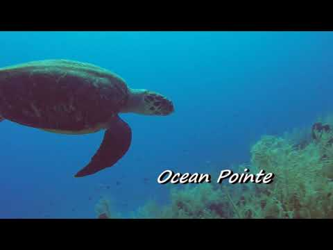 GRAND CAYMAN SCUBA DIVING WITH DIVE TECH APRIL 2016