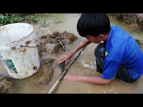 Best Hand Fishing - Smart  Boys Catching Catfish By Hand In Muddy Water In Dry Season Near Canals