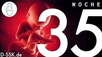 35. SSW / 35. Schwangerschaftswoche ✪ D-SSK.de