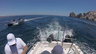 Sea Lions Catch a Ride Fishing Boat || ViralHog