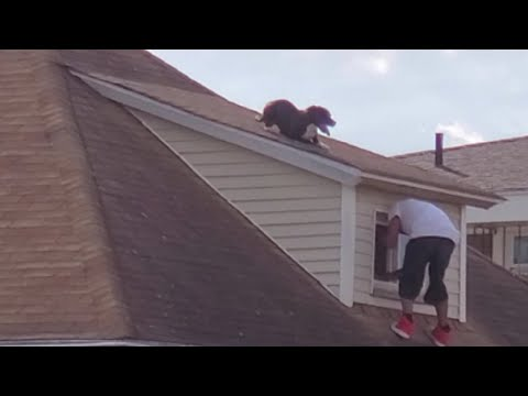 The Keith Show - Man heroically scales rooftop to save stranded dog