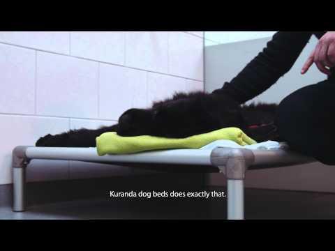 "kuranda-dog-beds:-dr.-paul-groenestein,-animal-clinic-""de-waterpoort"""
