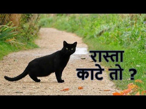 बिल्ली रास्ता काटे तो रुक जाना चाहिए क्यों ? 😱 | Gharelu Upay