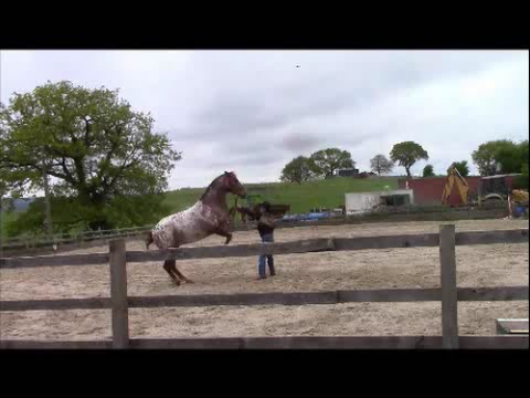 Aggressive Horse  Behavior, Horses That Rear, Strike, And Kick With Mike Hughes, Auburn California