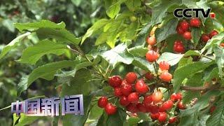 [中国新闻] 中国多地多形式助力农业发展   CCTV中文国际