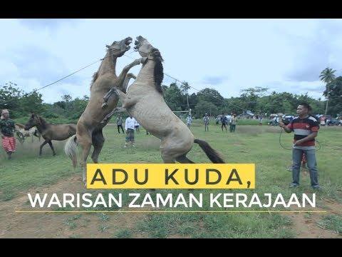 Adu Kuda, Warisan Zaman Kerajaan | Ekspedisi Pulau Muna (5)