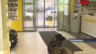 НТВ. ЧП - 18.09.12 Нападение собаки(НТВ. ЧП - 18.09.12 Нападение собаки., 2012-09-18T14:54:07.000Z)