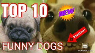 top 10 funny dogs 2019