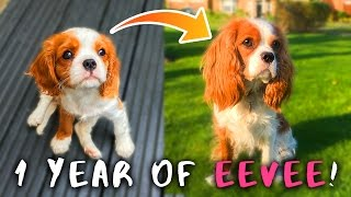 1 YEAR OF EEVEE!