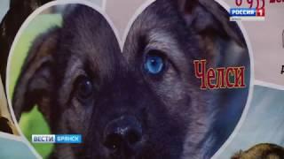 Брянский музей решил помочь пристроить бездомных собак