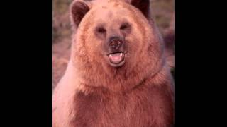 Bear Facts - Facts About Bears