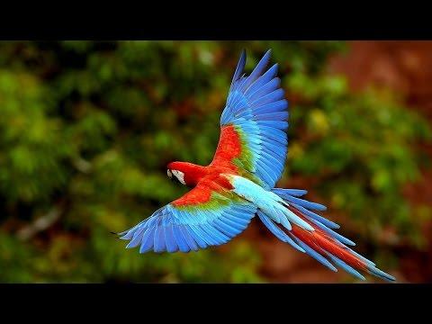 Самые красивые птицы. Красивые птицы фото!