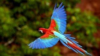 Самые красивые птицы. Красивые птицы фото!(Самые красивые птицы, красивые птицы фото смотрите и наслаждайтесь. Подписка на канал: http://www.youtube.com/channel/UC24QpA..., 2015-10-03T18:32:26.000Z)