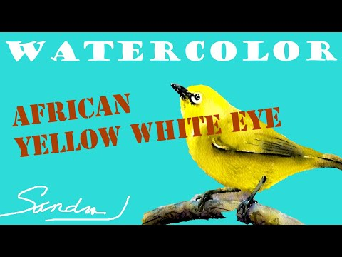 African Yellow White-Eye - Paint Birds in Watercolor - Bird Painting Demo and Tutorial