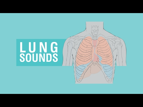 Lung sounds - Breath sounds Types & Causes