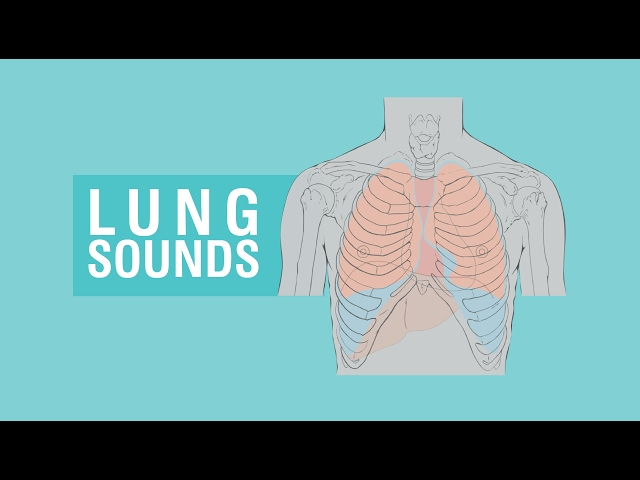 Complete Breath sounds   Types & Causes